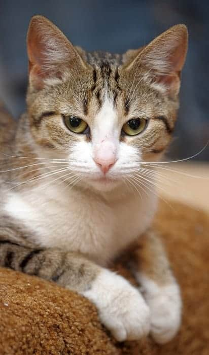 Adorable Unisex Tabby Cat Names