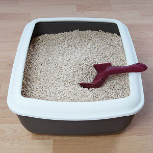 Best Cat Litters For Siamese Cats