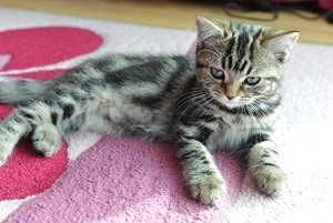 Can A Cat's Fur Pattern Change With Time