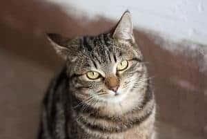 Female Tabby Cat Names