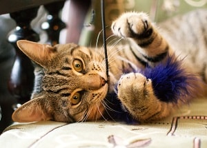 Toys Your Tabby Cat Will Actually Play With