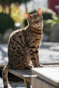 Why Are Bengal Cats So Expensive Price Chart Guide Faqcats Com