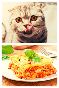 Can Cats Eat Lasagna Little Known Facts Faqcats Com