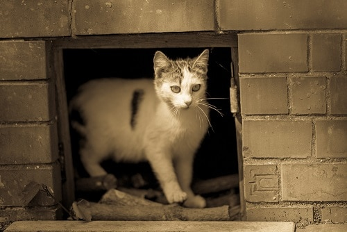 Why Do Cats Like Basements The, Litter Box In Unfinished Basement